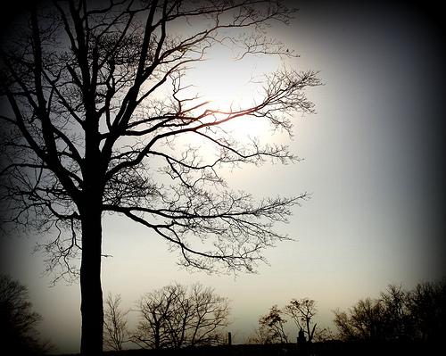 bare tree in gray sky